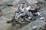 本殿と蘇民社の前に藻と砂