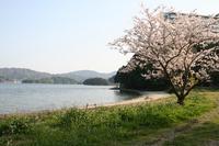 なんと桜が!