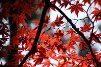 紅葉秋深し