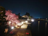 赤福本店裏の枝垂れ桜