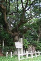 三重県の天然記念物ですえ