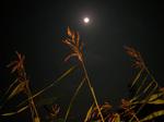 月とセット!