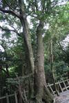 大きな木が生い茂ります