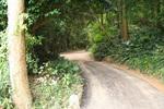 林の中に一本道