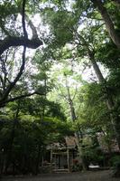 いろんな木があるんです@松下社