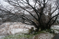 六地蔵にも,雪…