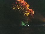 ライトアップされる烏帽子岩と木々