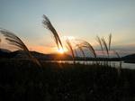夕日とすすき…