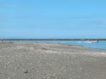 貝掘りの名所,高城浜