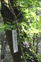 otoyama5.jpg